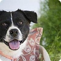 Adopt A Pet :: Noel - Marshville, NC