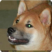 Adopt A Pet :: Fuji - ADOPTION PENDING! - Antioch, IL