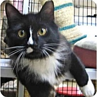 Adopt A Pet :: Shades of Black & White - Deerfield Beach, FL