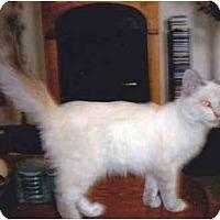 Adopt A Pet :: Tommy - Los Alamitos, CA