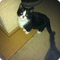 Adopt A Pet :: Calvin - Fairborn, OH