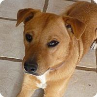 Adopt A Pet :: KENNY - Paron, AR