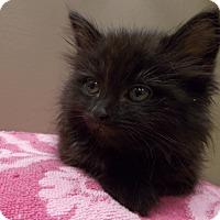 Adopt A Pet :: Ned - Delmont, PA