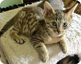 Cat Rescue Troy Mi