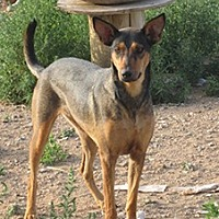 Adopt A Pet :: Queen - Santa Fe, NM