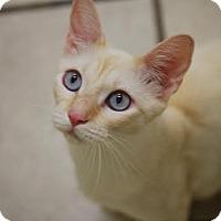 Adopt A Pet :: Lena - DFW Metroplex, TX