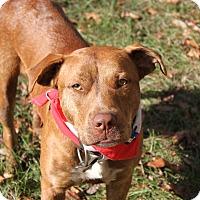 Adopt A Pet :: diesal - Morriston, FL