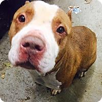Adopt A Pet :: Handsome - Elyria, OH