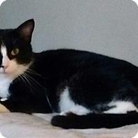 Adopt A Pet :: Anastasia - Springdale, AR
