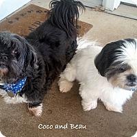 Adopt A Pet :: Coco & Beau - Jacksonville, FL