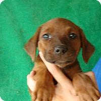 Adopt A Pet :: Hazel - Oviedo, FL
