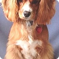 Adopt A Pet :: Barbie - Santa Barbara, CA