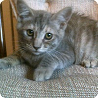 Adopt A Pet :: Penelope - Alliance, OH