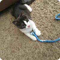 Adopt A Pet :: A393222 - San Antonio, TX