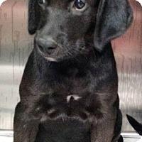 Adopt A Pet :: Luigi - Barnegat, NJ