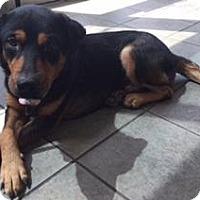Adopt A Pet :: A396985 - San Antonio, TX