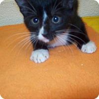 Adopt A Pet :: 32254954 - Gulfport, MS