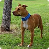 Adopt A Pet :: BUDDY - Arizona - Fulton, MO