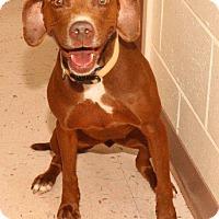 Pointer Mix Dog for adoption in McDonough, Georgia - P-Hazel