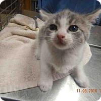 Adopt A Pet :: *RAINA - Ocala, FL