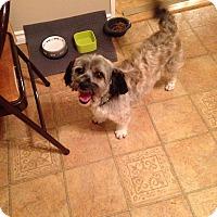 Adopt A Pet :: Fozzie - Edmonton, AB
