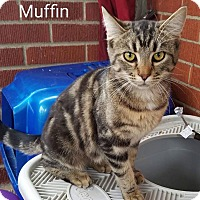 Adopt A Pet :: Muffin - Irwin, PA