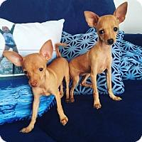 Adopt A Pet :: MADDIE + MACKENZIE - El Segundo, CA