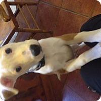 Adopt A Pet :: Gael 2 W - Olympia, WA