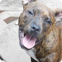 Adopt A Pet :: ISABELLA TH - Tampa, FL