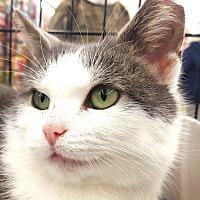 Adopt A Pet :: Pebbles - E. Claridon, OH