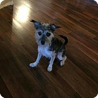 Adopt A Pet :: Bailey - Island Heights, NJ
