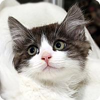 Adopt A Pet :: Justice - Yorba Linda, CA