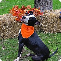 Adopt A Pet :: Rose - Burleson, TX