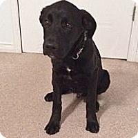 Adopt A Pet :: Hunter - Rigaud, QC