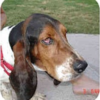 Adopt A Pet :: Watson - Phoenix, AZ