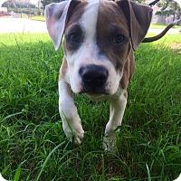 Adopt A Pet :: Freeway - Atlanta, GA