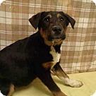 Adopt A Pet :: *THEODORE