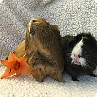 Adopt A Pet :: Hakeem & Oscar Wilde - Fullerton, CA