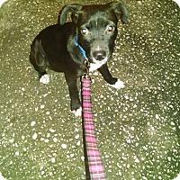 Adopt A Pet :: Lexie - Tampa, FL