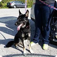 Adopt A Pet :: Lexi - Kansas City, MO