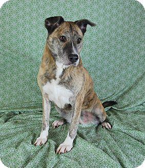 Terrier (Unknown Type, Medium) Mix Dog for adoption in Jackson, Mississippi - Audrey