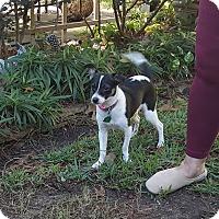 Adopt A Pet :: Bessie - Ft. Atkinson, WI