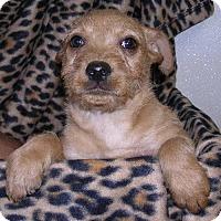 Adopt A Pet :: Rosie Boy 4 - Yucaipa, CA