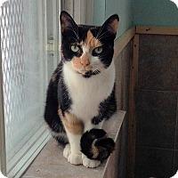 Adopt A Pet :: Patrice - Mississauga, Ontario, ON