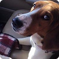 Adopt A Pet :: Honey - Huntsville, TN