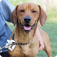 Adopt A Pet :: Scooby-Prison Dog - Elyria, OH