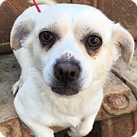Adopt A Pet :: Stephie - Santa Ana, CA