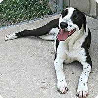 Adopt A Pet :: Bo - Lufkin, TX