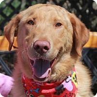 Adopt A Pet :: Zeus - Garfield Heights, OH