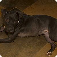 Adopt A Pet :: Trixie - Baton Rouge, LA